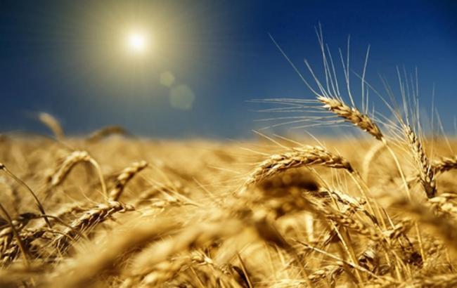 Мінагропрод виступає за створення робочої групи по інфраструктурі для експорту зерна